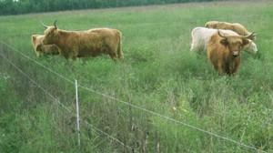 Факторы влияющие на мясную продуктивность