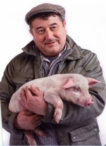 Кондиции убойных свиней