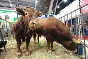 Принцип зональности – в основу бонитировки скота