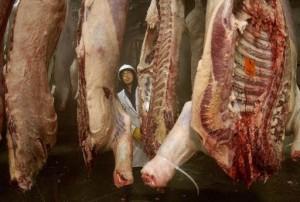 Мясные качества молочных и молочно-мясных пород