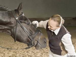 Племенная работа при разведении лошадей