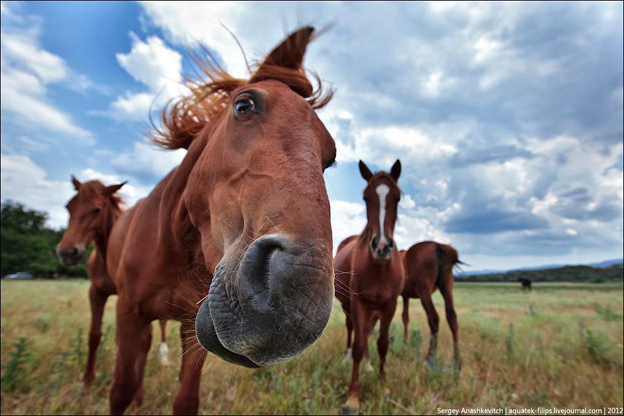 Украина: Государство поддержит коневодство