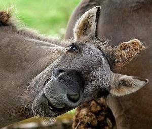 Использование рабочих лошадей