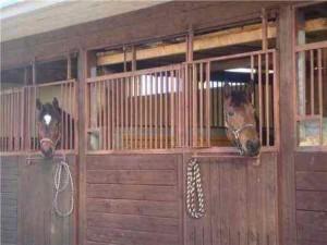 Системы содержания лошадей
