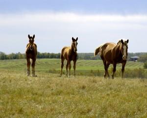 Масти и отметины лошадей