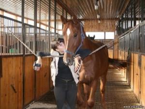 Улучшение лошадей путем межпородных скрещиваний