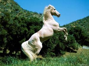 Ипподромный тренинг и испытания лошадей