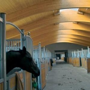 Уровень молочной продуктивности лошадей