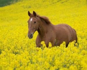 Особенности табунных лошадей