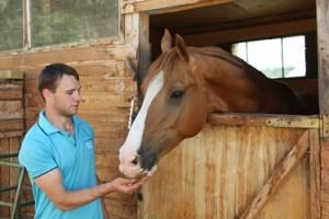 Постройки и водопои для лошадей