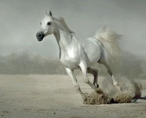 Типы и качества спортивных лошадей