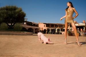 Свинья-на-поводке