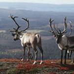 природы-Финляндии