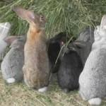На Кубани развивается альтернативное животноводство