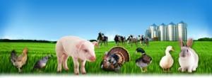 Правильный выбор комбикорма для животных и птиц
